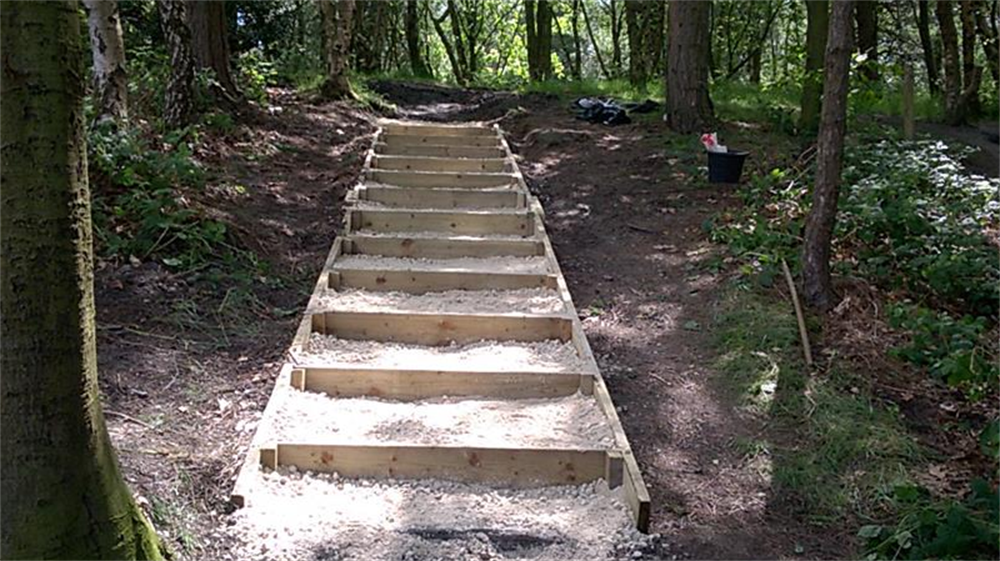 Steps along woodland path